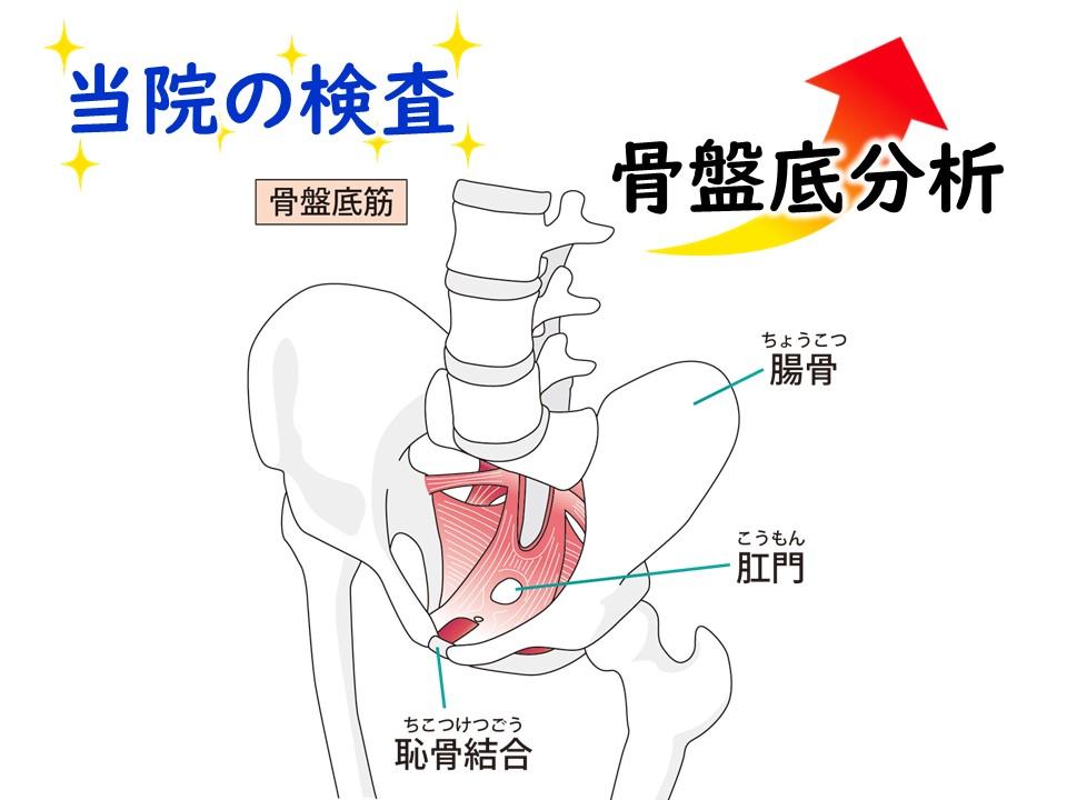 しっかり検査―骨盤底分析 三田市・神戸市・西宮市から多数ご来院の産後骨盤矯正mamaNEXT